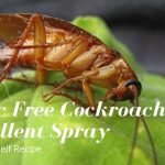 Homemade Natural Cockroach Repellent Spray